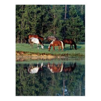 Reflexión del caballo postal