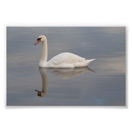 Reflexión del cisne mudo arte con fotos