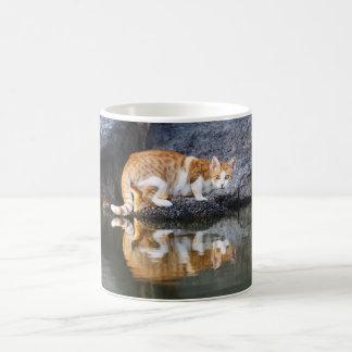 Reflexión del gato en el agua de la charca, _de la taza de café