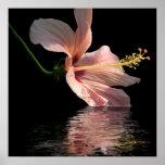 Reflexión del hibisco impresiones