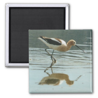 Reflexión del pájaro en el mono lago iman de frigorífico