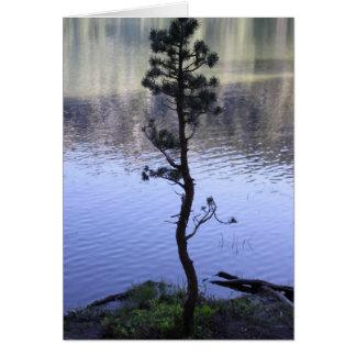 Reflexión en el agua tarjetas
