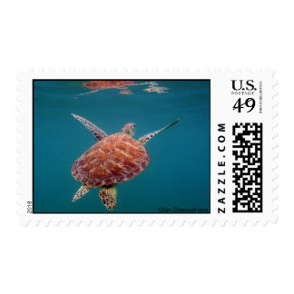 Reflexión gigante de la tortuga de mar de UW Envio