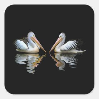 Reflexión hermosa de los pelícanos en fondo negro pegatina cuadrada