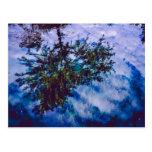 Reflexión imponente del cielo y de árboles postales