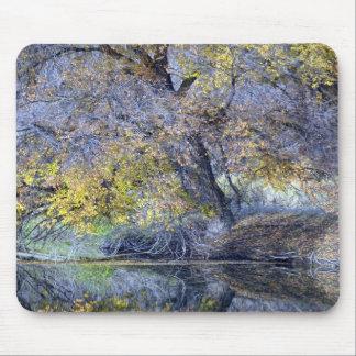 Reflexión Mousepad del río