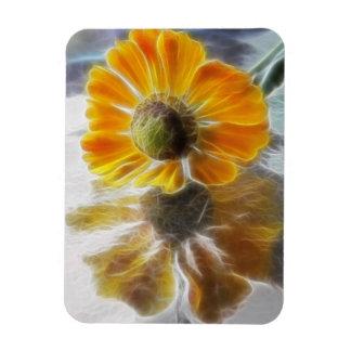 Reflexiones de la flor del Helenium Imán Foto Rectangular