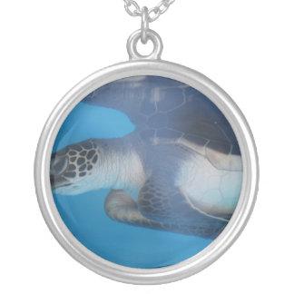 Reflexiones de la tortuga grimpola personalizada