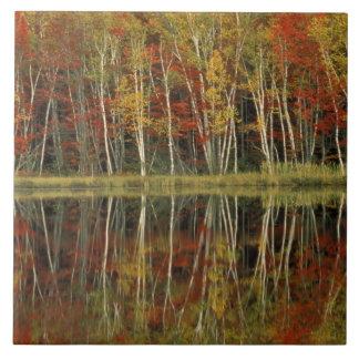 Reflexiones del follaje de otoño y del abedul; Hia Azulejo Cuadrado Grande