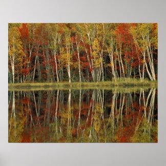 Reflexiones del follaje de otoño y del abedul Hia Impresiones