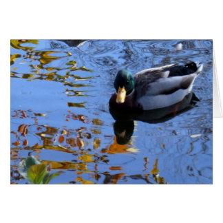 Reflexiones del pato tarjeta pequeña