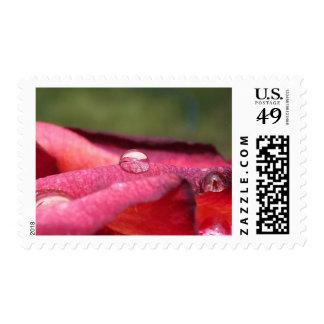Reflexiones en sellos color de rosa