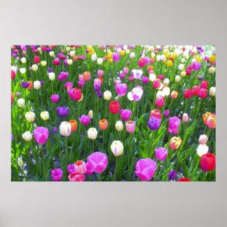 Refreshing Mixed Tulip Garden Poster