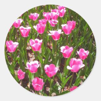 Refreshing Pink Tulip Garden Classic Round Sticker