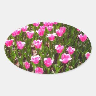 Refreshing Pink Tulip Garden Oval Sticker