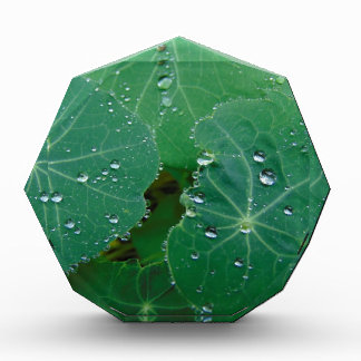 Refreshing Rain Drops Acrylic Award