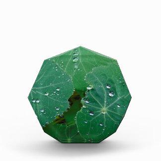 Refreshing Rain Drops Award