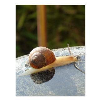Refreshing Snail Postcard