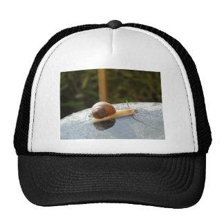 Refreshing Snail Trucker Hat