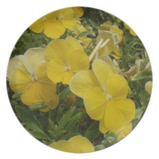 Refresque la viola amarilla de la onda platos