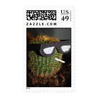 Refresqúese como cactus