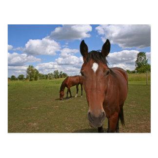 Refrigeración de los caballos tarjetas postales