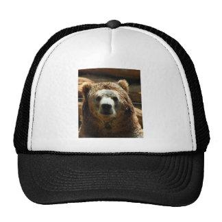 Refrigeración del oso grizzly gorra