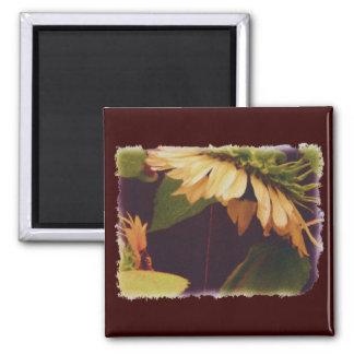 Refrigerator Magnet -- Sunflower Madonna Magnets