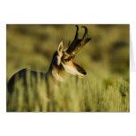 Refugio nacional del antílope de la montaña del ci tarjeta de felicitación