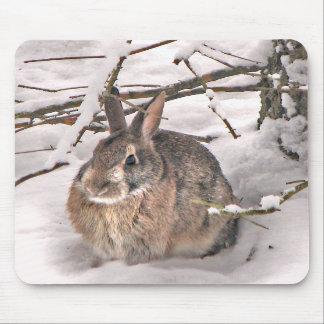 Refugio que busca del conejito alfombrilla de ratones