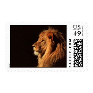 Regal African Lion Stamp