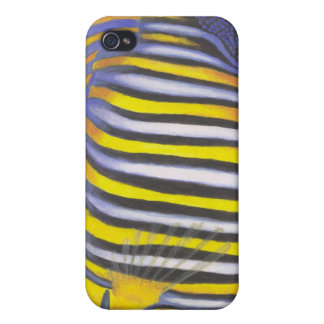 Regal Angelfish 02 iPhone 4/4S Cases