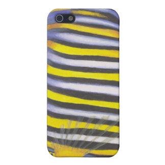 Regal Angelfish 02 iPhone SE/5/5s Case