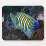 Regal Angelfish Mouse Pads