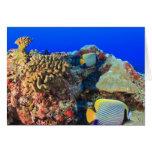 Regal Angelfish Pygoplites diacanthus), Greeting Cards