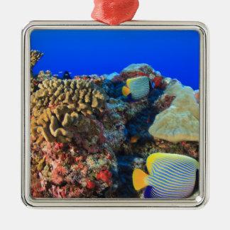 Regal Angelfish Pygoplites diacanthus), Metal Ornament