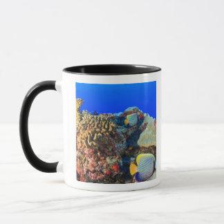 Regal Angelfish Pygoplites diacanthus), Mug