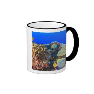 Regal Angelfish Pygoplites diacanthus), Ringer Coffee Mug