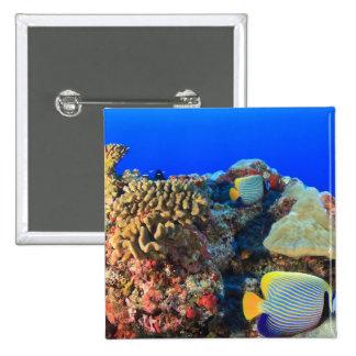 Regal Angelfish Pygoplites diacanthus), Pinback Button