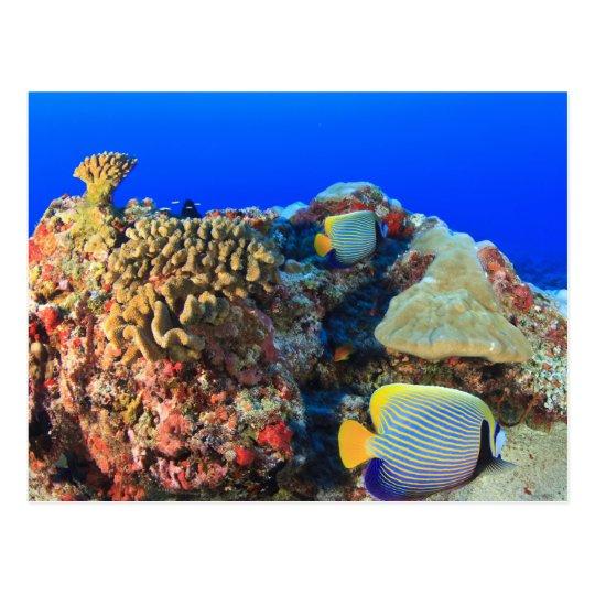 Regal Angelfish Pygoplites diacanthus), Postcard