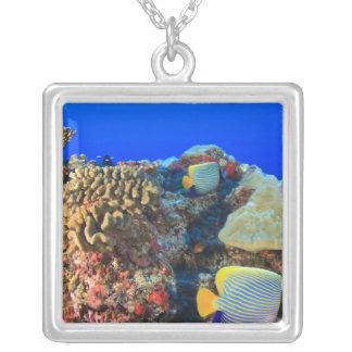 Regal Angelfish Pygoplites diacanthus), Square Pendant Necklace