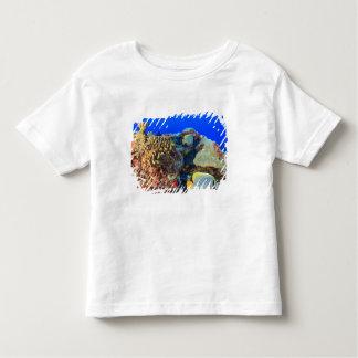 Regal Angelfish Pygoplites diacanthus), Toddler T-shirt