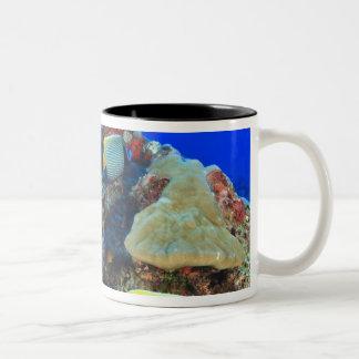 Regal Angelfish Pygoplites diacanthus), Two-Tone Coffee Mug
