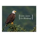 Regal Bald Eagle Post Card