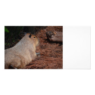 regal capybara back view animal photo card