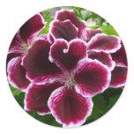 Regal Geranium Flowers Classic Round Sticker