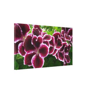 Regal Geranium Flowers Elegant Maroon Floral Canvas Print