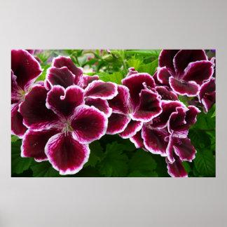 Regal Geranium Flowers Elegant Maroon Floral Poster