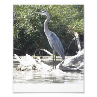 Regal Heron Art Photo