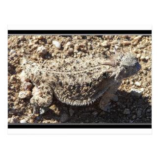 Regal Horned Lizard Post Card